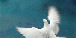 Thumbnail image for Peace be unto you.