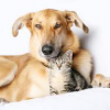 Thumbnail image for Animal Consciousness: The Divinity of Cats and Dogs
