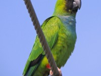 Thumbnail image for Diego the Parakeet Proves the Power of Love