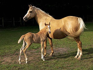 Post image for Bareback Horse Riding Utterly Fantastic