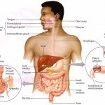 Top 10 Ways to Relieve Your Digestion Problems…Naturally