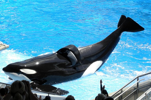 How You Can Help the Dolphins and Whales in Captivity