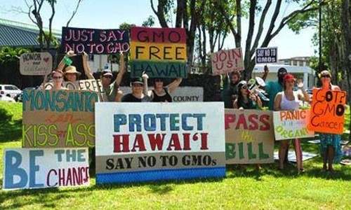 Post image for Hawaii's Big Island Bans GMO Crops and Biotech Companies
