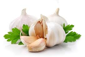 Post image for Garlic Proven 100 Times More Effective Than Antibiotics, Working In A Fraction of The Time