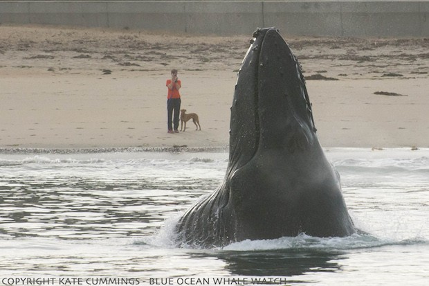 Post image for Humpback whale surprises dog on beach