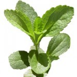 Cancers Kryptonite…Stevia rebaudiana