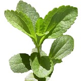 Post image for Cancers Kryptonite…Stevia rebaudiana
