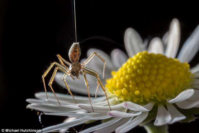 Post image for Spiders Use the Earth's E-Field to Fly – Can We?