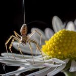 Spiders Use the Earth's E-Field to Fly – Can We?